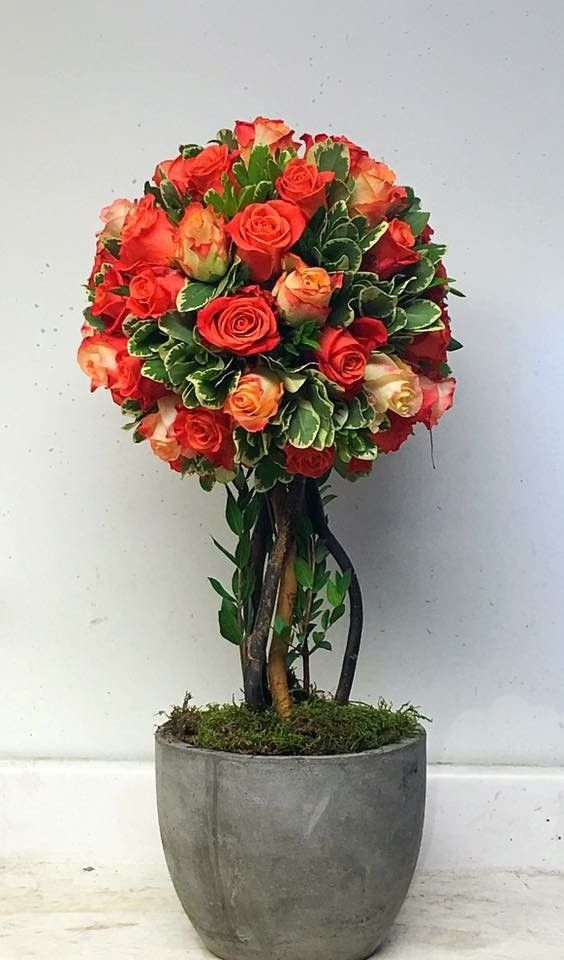Send Rose Topiary in Boonton, NJ from Main Street Bloomery, the best florist in Boonton. All flowers are hand delivered and same day delivery may be available.