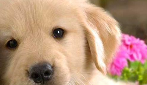 Se spune ca cei mai buni prieteni ai omului ar fi, dintre toate animalele…