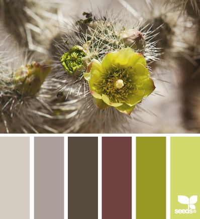 """prickled bloom via Design-Seeds 