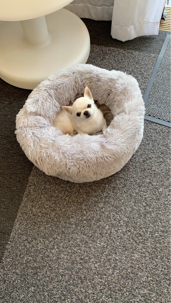 Comfy Calming Dog/Cat Bed rockcoo Dog cat, Dog design