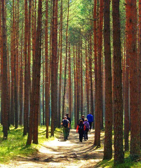 Roztocze - nordic walking