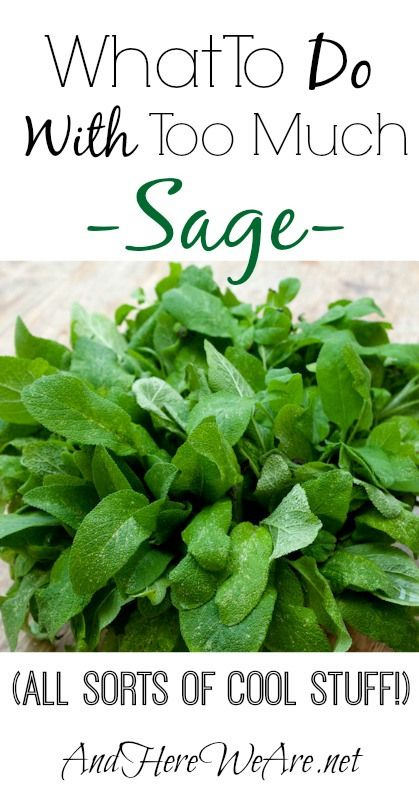 Tons of great ideas of what To Do With Sage. Brown butter sage, sage vinegar cleaning spray, lemon spice vodka... #andhereweare