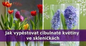 Snadný způsob, jak vypěstovat cibulnaté květiny ve skleničkách