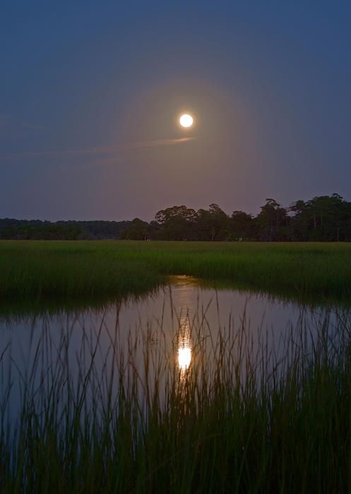 Moonshine on Burnside Island in Savannah, GA. This is actually a full moonrise above a saltwater river and marsh estuary.