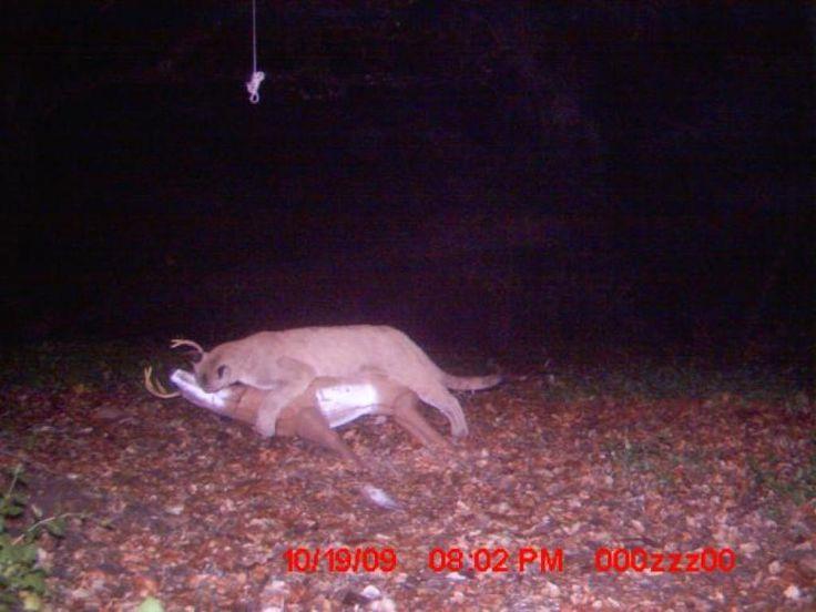 Mmmm ever wonder what happens to your deer decoy?