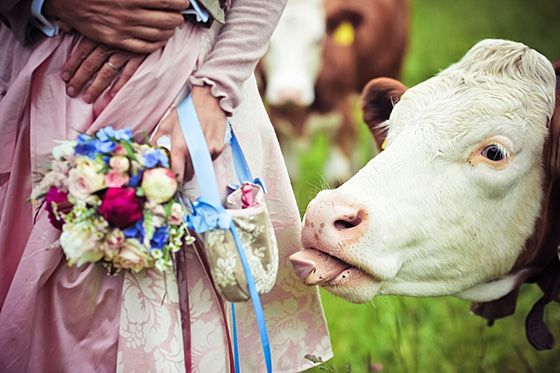 So would like my cows to be at my wedding!