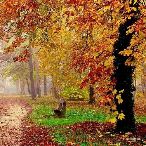 Autumn park, budapest Hungary
