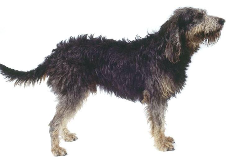 Uglier Dog Breed