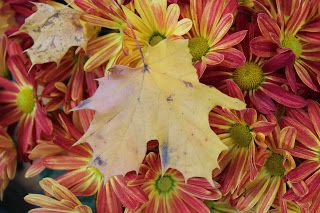 #Falling Leaves and #Red Flowers + Museum Time With The Ladies | The Home Of The Twisted Red LadyBug