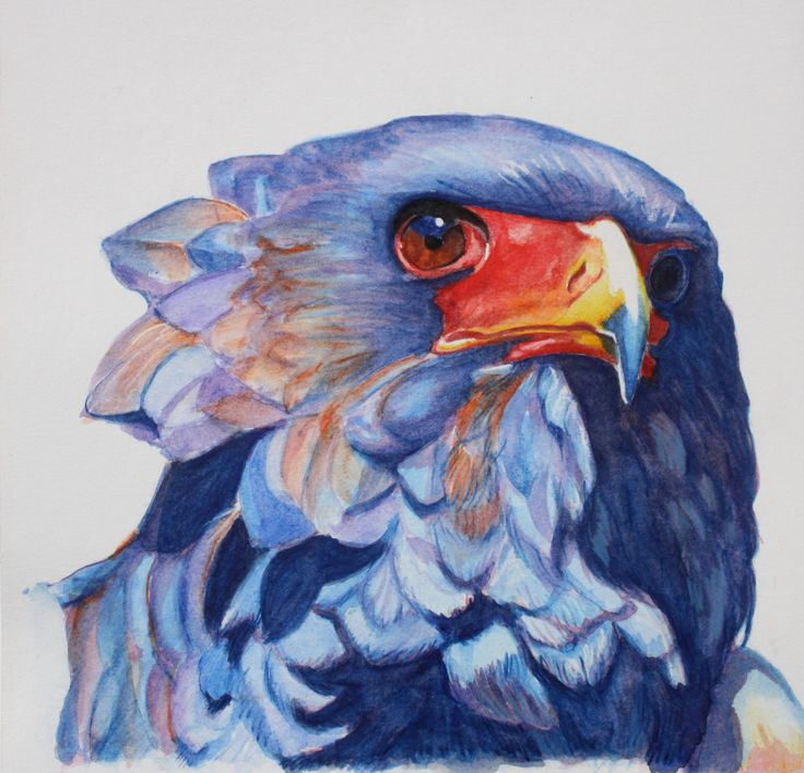 water colour Bird painting. Bateleur