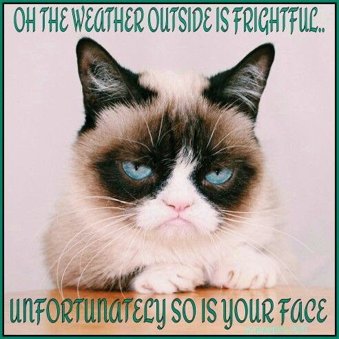 Another grumpy cat meme by the other grumpykat 2015