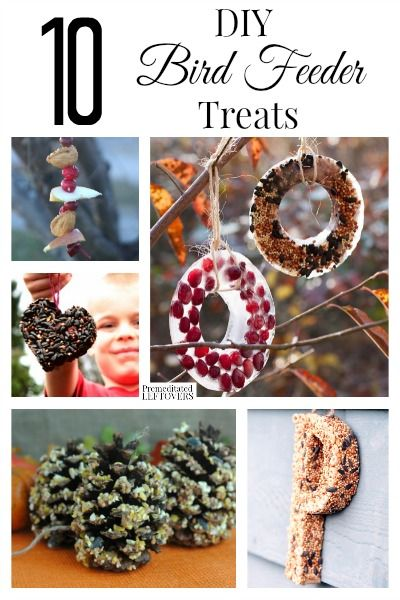 Watching birds from the window in the winter is a fun thing to do for young and old alike. Here are 10 DIY Bird Feeder Treats to make to draw a great crowd.