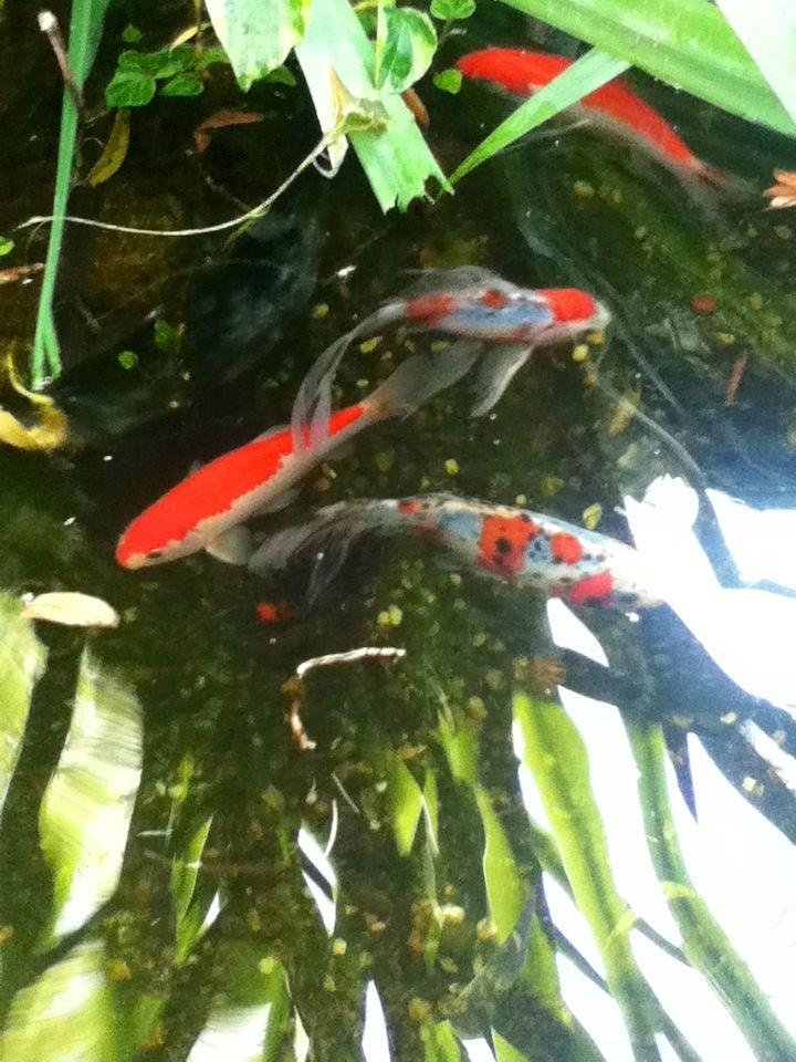 Fish In Backyard Pond Crossword : Fish on Pinterest