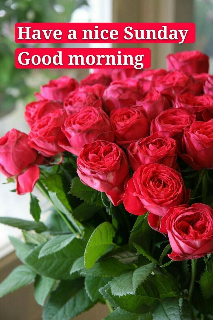Good Morning Images For Whatsapp In 2020 Good Morning Photos Good Morning Nature Good Morning Picture