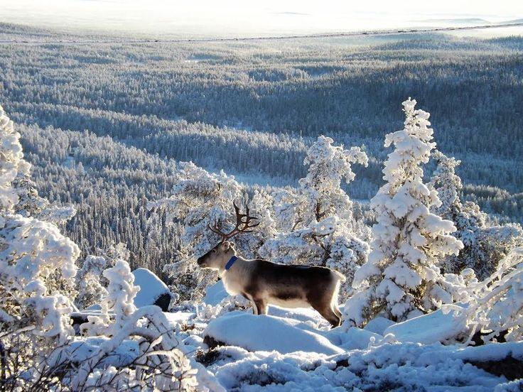 Outstanding views, Salla Fell, Lapland Finland Photo by Ahti Kantola