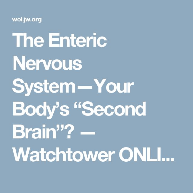 """The Enteric Nervous System—Your Body's """"Second Brain""""? — Watchtower ONLINE LIBRARY"""