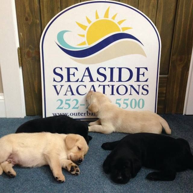 Pet Friendly Outer Banks Vacation Rental Homes // http://www.outerbanksvacations.com/pet-friendly-outer-banks-rentals
