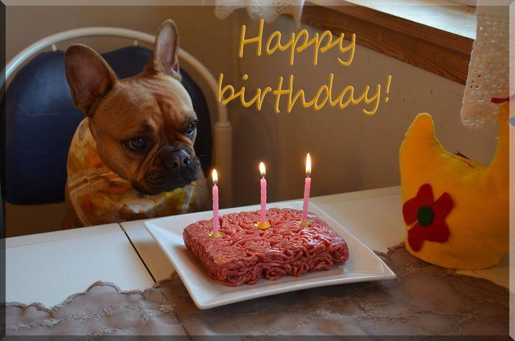 Jeg heter Borgny og er ei lita fransk bulldog jente på 3 år :) Familien min sier dem elsker meg :D