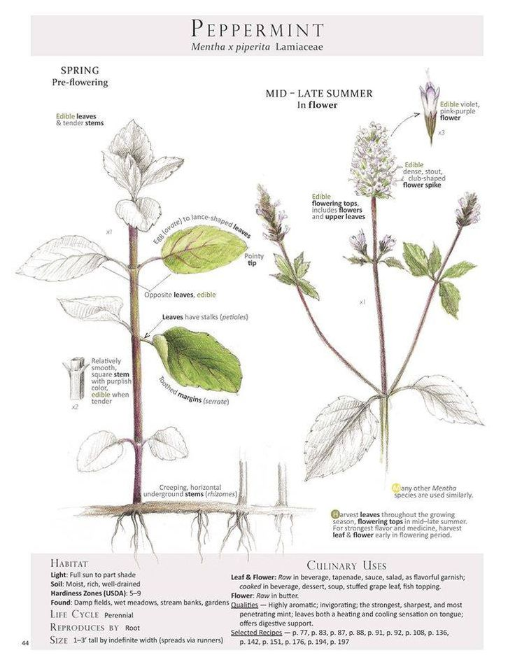 Plant Database: 91 Best Botanical Images On Pinterest