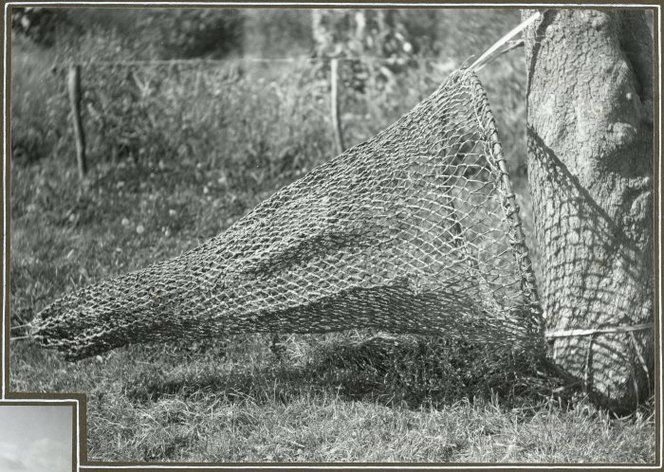 9 best fyke nets images on pinterest fishing peach and for Fish trap net