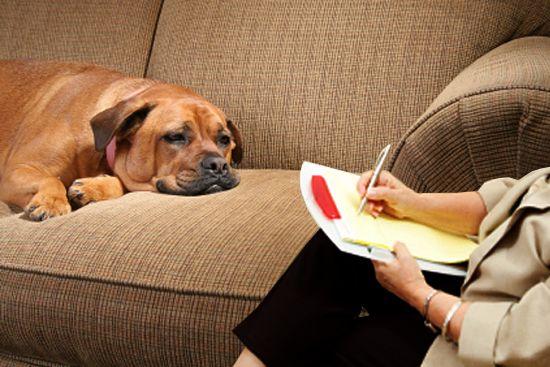 Como funciona a psicologia dos cães? O que são problemas psicológicos em cachorros? O terapeuta de cães Bruno Leite conta tudo nesse artigo.