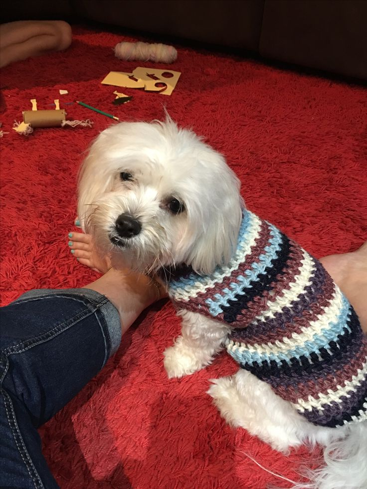 Dog Jumper made from scraps of yarn.