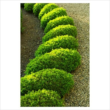 124 best images about knot gardens and topiaries on pinterest for Knot garden design ideas
