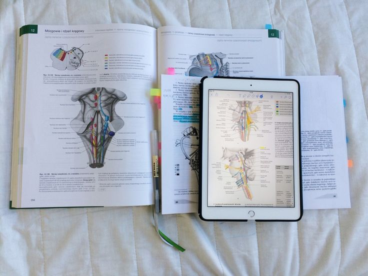 """medstudentgettingpersonal: """" 27/08/16 Neuro: I have returned to those poorly studied topics and now things start making sense. Better late then never Have a productive Saturday! """""""