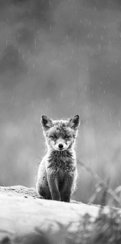 Waouh un magnifique renard !