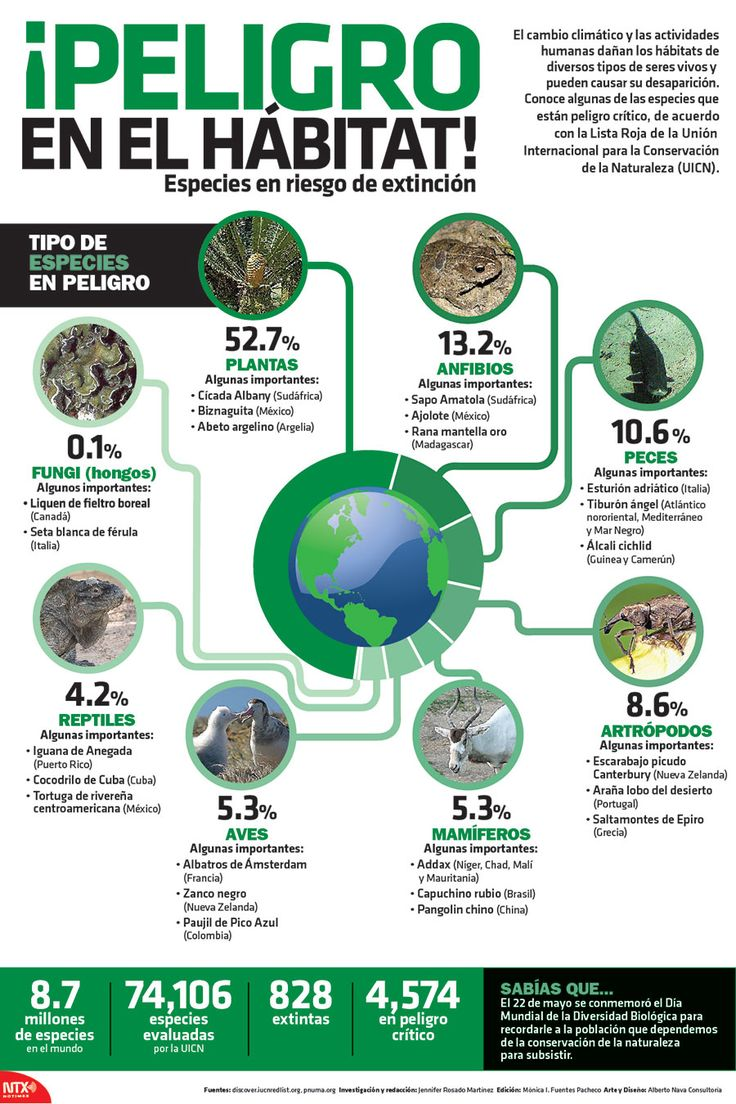 El Cambio climático y las actividades humanas dañan los hábitats de diversos tipos de seres vivos y pueden causar su desaparición. Conoce algunas de las especies que están en peligro crítico, de acuerdo a la Lista Roja de la Unión Internacional para la Conservación de la Naturaleza (UICN). #Infographic