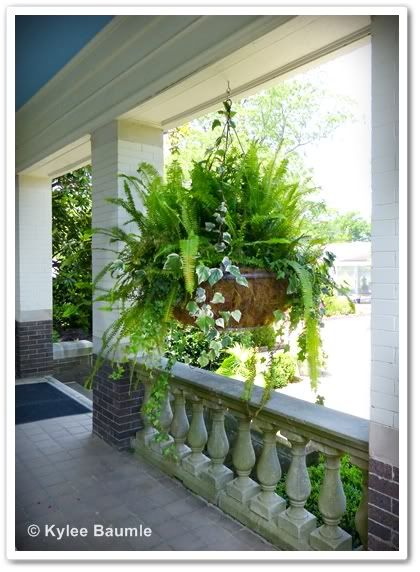 Simple hanging container - love the ivy added to the fern. Shade, Front porch.
