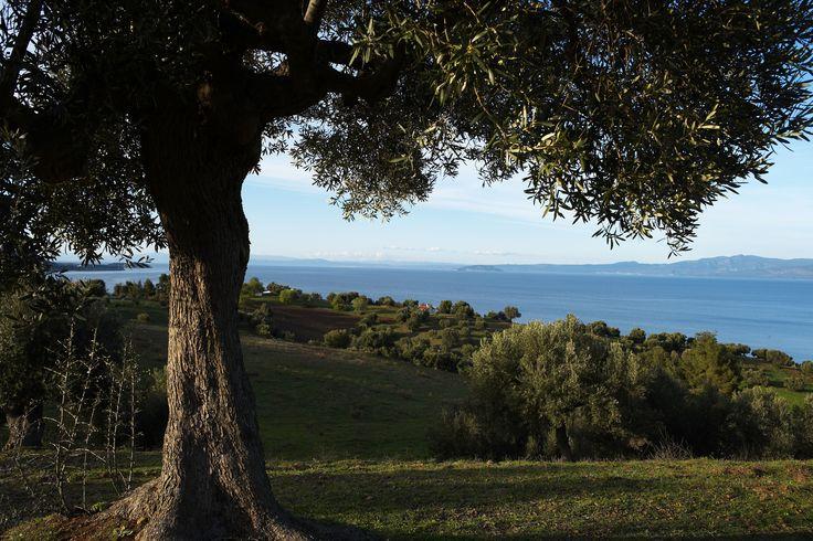 Beautiful nature - Halkidiki - Greece