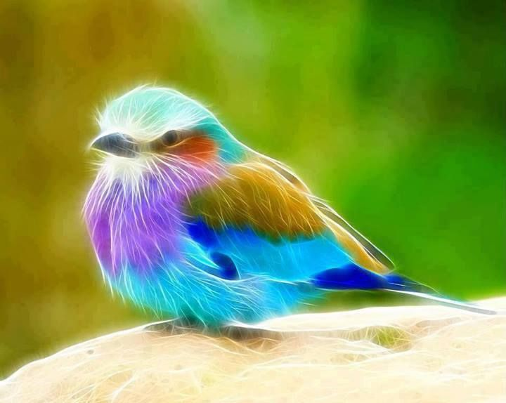 MultiColored Bird from Amazing Images \u0026 Quotes