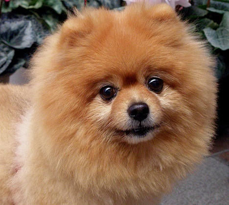 17 Best images about Red Puppy on Pinterest | Ruby red ...