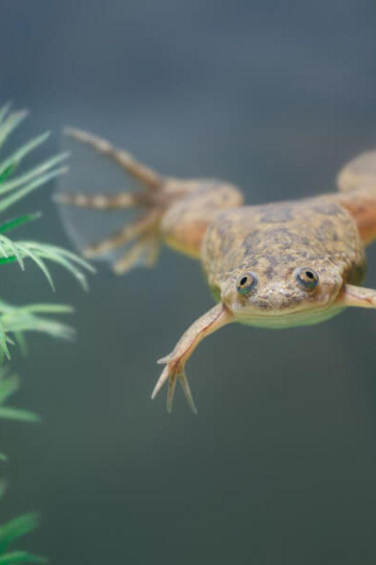 Best Diy African Dwarf Frog Tank Setup For 2020 Spiffy Pet Products Dwarf Frogs Frog Tank Pets