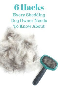 Best 25 dog shedding ideas only on pinterest itchy dog for Every dog needs a home