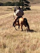Experience a true horseback riding adventure only at Oaklands Country Manor