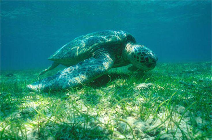 Martinique - Mangrove, lagon et corail à Fleurdo - Bon plan voyage France Martinique