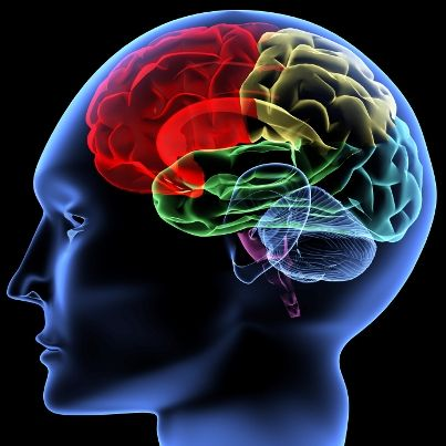 #Neuroscince #Awareness #JehangirCare 10 facts you didn't know about your Brain Throughout history, the human brain has been remarkably good at dismissing itself. Everyone from ancient Egyptians to Aristotle has downplayed the role of the mysterious stuff between our ears. To read more click on http://bit.ly/1ggJffc