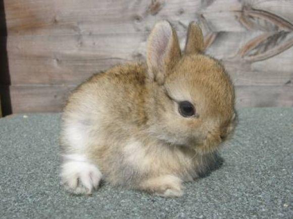 Wee little dwarf bun!