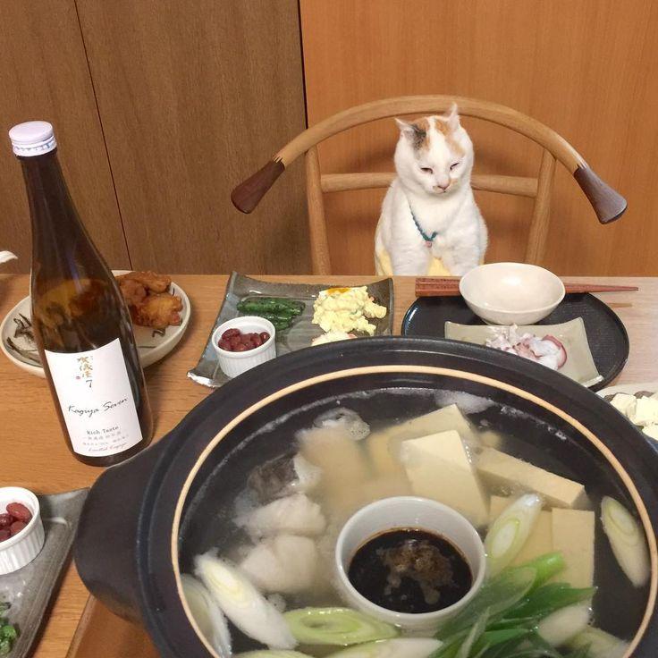 ぶちゃマルです。 湯豆腐は、絹ごし豆腐と木綿豆腐両方いれて土佐醤油で。お酒とあいますにゃ . . 今夜のお酒は ₍˄·͈༝·͈˄₎ #成龍酒造  #賀儀屋7  ラベルお洒落ね . #優しいマルちゃんママ  のいる #家飲み#鍋 #居酒屋マルちゃんへどうぞ  #日本酒  #sake #猫晩酌 #猫との暮らし #にゃんすたぐらむ  #にゃんだふるらいふ #ねこのいる生活 #猫 #cat #日曜日 #ペコねこ部 #おうちごはん #Japanesesake #日本酒女子#湯豆腐 #和食 . .