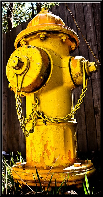Yellow fire hydrant. The angle of this is just gorgeous and I love how it fills up the frame!