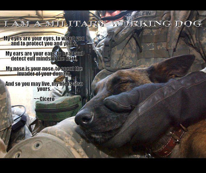 us army dog handler