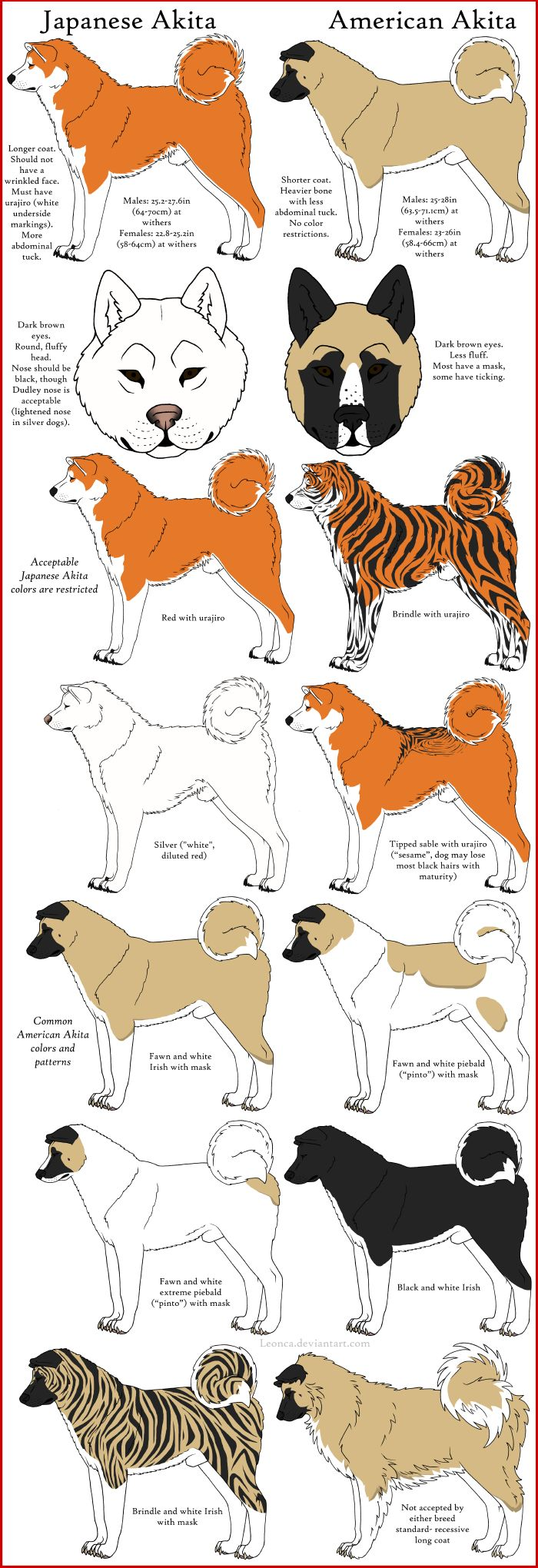 Akita Breeds Comparison by Leonca.deviantart.com on @deviantART