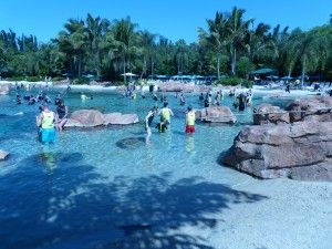 Why Discovery Cove - near SeaWorld - is Orlando's Best Kept Secret