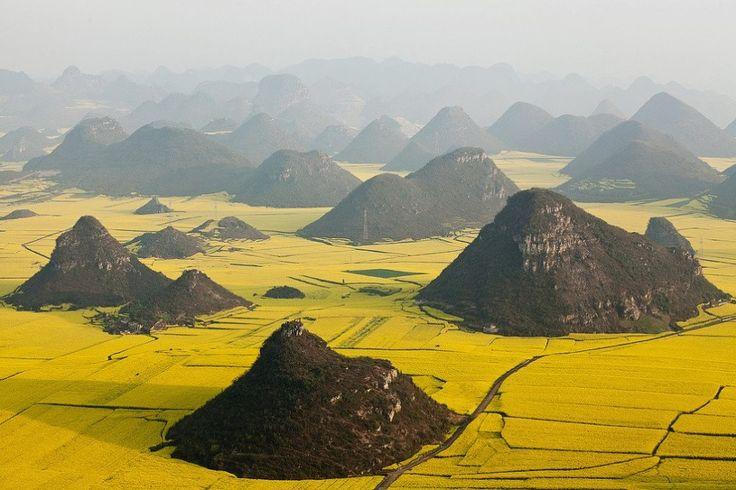 Canola flower fields, Yunnan, China