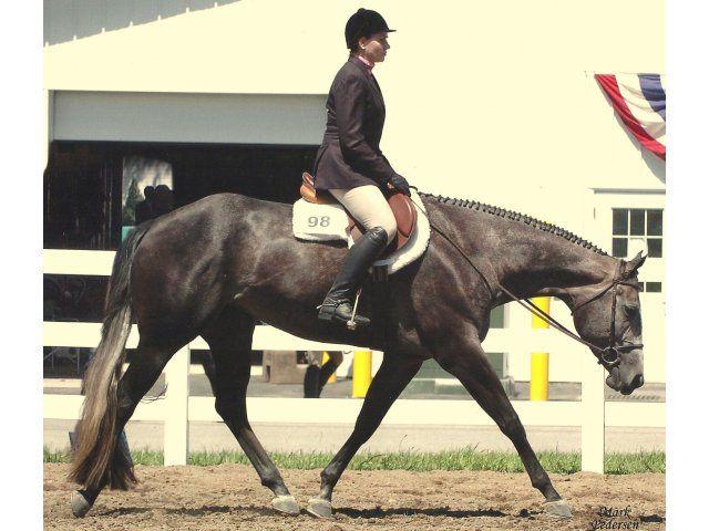 hunter under saddle horses | Proven Hunter Under Saddle Horse, 2009, Mare, Gray, English Pleasure ...