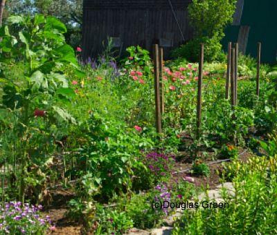 Potager - Doug Green's Garden: Flowers Gardens, Potager Garden, Green Garden, Flower Gardens, Vegetable Garden, Landscape Flowers