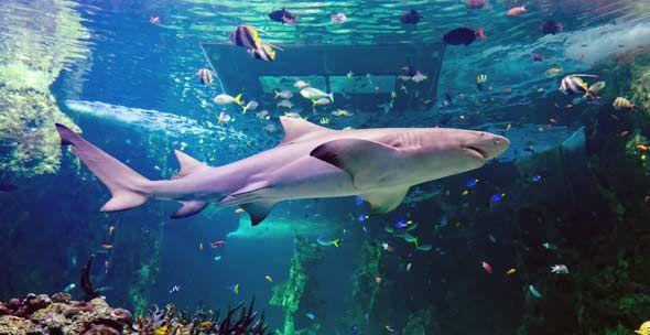 Sydney Aquarium Reef Theatre