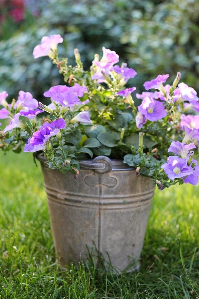 Use Unusual Containers To Create Interest In Your Garden